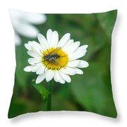 Fly On Daisy 3 Throw Pillow