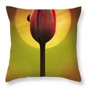 Garden Stories II Throw Pillow