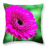 10188 Purple Gerbera Throw Pillow