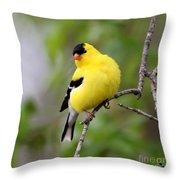 Gold Finch Throw Pillow