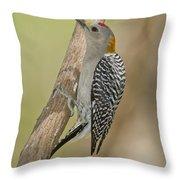 Golden-fronted Woodpecker Throw Pillow