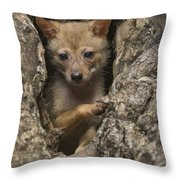 Golden Jackal Canis Aureus Cubs Throw Pillow