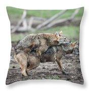 Golden Jackal Canis Aureus Throw Pillow