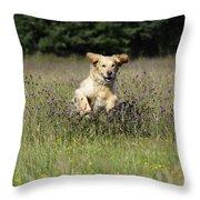 Golden Retriever Running Throw Pillow by John Daniels