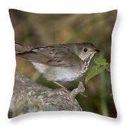 Gray-cheeked Thrush Throw Pillow