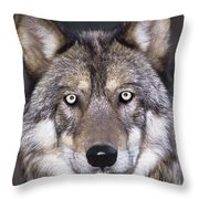 Gray Wolf Portrait Endangered Species Wildlife Rescue Throw Pillow