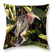 Green Backed Heron Throw Pillow
