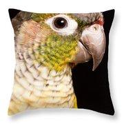 Green-cheeked Conure Pyrrhura Molinae Throw Pillow
