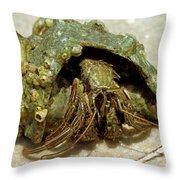 Green Striped Hermit Crab Throw Pillow