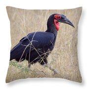Ground Hornbill Throw Pillow
