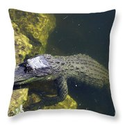 Hang Around Throw Pillow