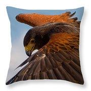 Harris Hawk Approach Throw Pillow