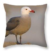 Heermanns Gull Throw Pillow