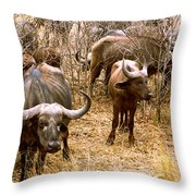 Herd Of Cape Buffaloes Syncerus Caffer Throw Pillow