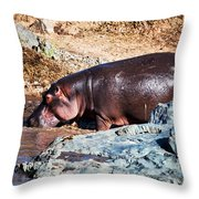 Hippopotamus In River. Serengeti. Tanzania Throw Pillow