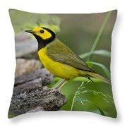 Hooded Warbler Throw Pillow