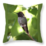 Hummingbird Hangout Throw Pillow