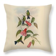 Hummingbirds Throw Pillow by Philip Ralley