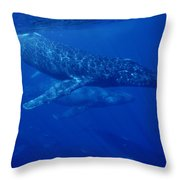 Humpback Whale Traveling Group Maui Throw Pillow