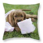 Irish Setter Puppy Throw Pillow