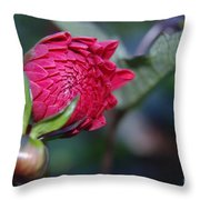 Just Before The Bloom  Throw Pillow