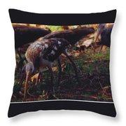 Juvenile White Ibis Throw Pillow