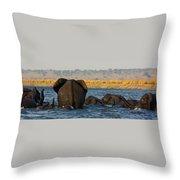 Kalahari Elephants Crossing Chobe River Throw Pillow