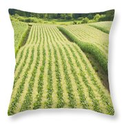 Late Summer Corn Field In Maine Throw Pillow