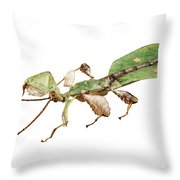 Leaf Insect Species Phyllium Bioculatum Male Throw Pillow