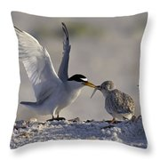 Least Tern Feeding It's Young Throw Pillow