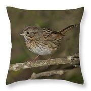 Lincolns Sparrow Throw Pillow
