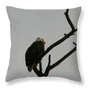 Looking Up To Bald Eagle's Throw Pillow