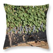 Lorimar Grapes Throw Pillow