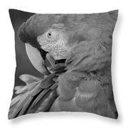 Macaws Of Color B W 17 Throw Pillow