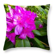 Magenta Swirl Throw Pillow