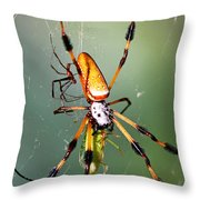 Male And Female Silk Spiders With Prey Throw Pillow