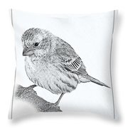 Male House Finch Sketch  Throw Pillow