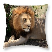 Male Lion On The Masai Mara  Throw Pillow
