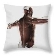 Male Muscle Anatomy Of The Human Back Throw Pillow