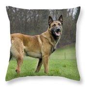 Malinois, Belgian Shepherd Dog Throw Pillow