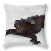 Marine Iguana Galapagos Throw Pillow