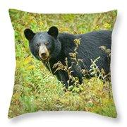 Meadow Black Bear Throw Pillow