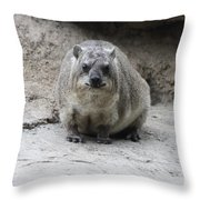 Rock Hyrax Headshot Throw Pillow
