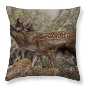 Mesopotamian Fallow Deer 3 Throw Pillow