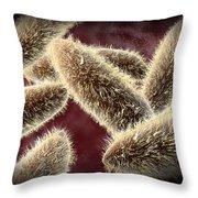 Microscopic View Of Paramecium Throw Pillow