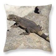 Mojave Desert Chuckwalla Throw Pillow