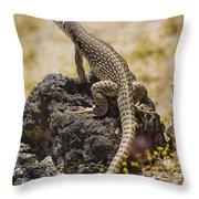Mojave Desert Iguana Throw Pillow