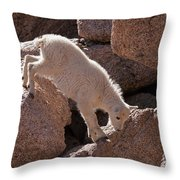 Mountain Goat Kid On Mount Evans Throw Pillow