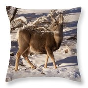 Mule Deer   #6339 Throw Pillow