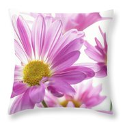 Mums Flowers Against White Background Throw Pillow
